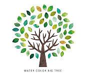 Big tree watercolor
