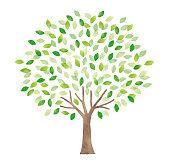 Watercolor big tree