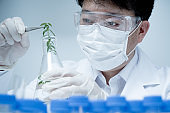 Asian male researcher researching plant specimens in the laboratory.