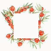 Watercolor hand painted nature healthy squared border frame with orange sea buckthorn berries and green leaves on branches on the white background for invite and greeting card with the space for text