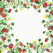 Watercolor hand painted nature forest squared border frame with red wild strawberries, white blossom flowers and green leaves bush on the white background for invitation and greeting cards