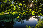 Sun shining over small pond on a calm day