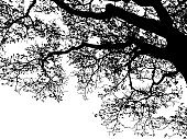 silhouette tree branches