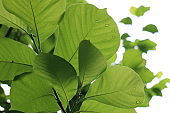 Close up green leaves
