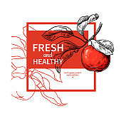 Apple label vector drawing. Juice or cider engraved template. Hand drawn fruit illustration.