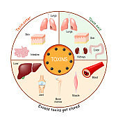 Toxins. Process of Detoxification and elimination. Enter, exit, and store of toxins in humans body.