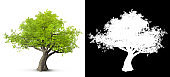 tree isolated on white background with alpha mask for easy isolation 3D illustration