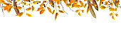 autumn leaves and branches frame, isolated on white background