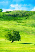 Green tree on the hills with fresh green grass.