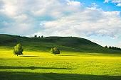 Green trees on the hills with green grass