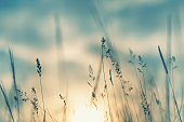 Wild grass in the forest at sunset.