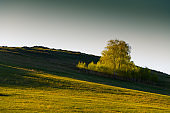 Green birch trees on the hills with fresh green grass.