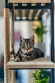 Young tabby cat lying on wooden shelf