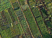 Green vegetable garden, aerial view