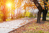 Stairs in a park covered with leaves in autumn day with sunlight