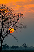 Big sun behind dark tree and sunset in tropical forest,Thailand,ASIA.