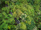 Drone aerial view of trail in spring tropical forest