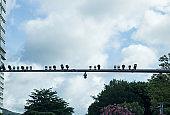 Surveillance  cameras hanging above road on modern city