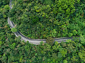 Aerial drone view of trail in spring tropical forest