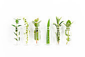 Mix of herbs, green branches, leaves mint, eucalyptus, rosemary, aloe Vera and plants collection on white background. Set of herbs. Flat lay. Top view