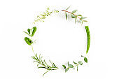 Round wreath frame made of mix of herbs, green branches, leaves mint, aloe Vera, eucalyptus, thyme and plants collection on white background. Flat lay