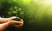 Hands protecting green plant on sunny background. Environment and ecology concept. Sources for renewable, sustainable development.