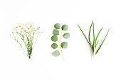 Green branches, leaves medicinal herbs: chamomile, eucalyptus, aloe, collection on white background. flat layout, top view