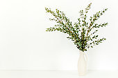 Branches of eucalyptus in vase on table on light background. Home decor. Blog, website or social media concept