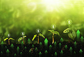Seedling growing step in garden with dollar icon and green arrow graph. Concept of green and eco business growth, profit, development and success.