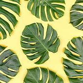 Pattern tropical palm leaves Monstera on yellow background. Flat lay, top view