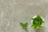 Fresh basil leaves in mortar on gray stone background. Top view. Space for text. Healthy eating concept.