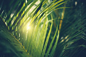 Palm tree leaves. Tropical trees background