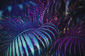 Neon colored palm tree leaves. Tropical trees background