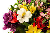 Alstroemeria, commonly called the Peruvian lily or lily of the Incas.