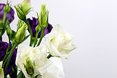 bright purple and white eustoma flowers isolated on white background.