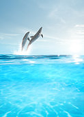 dolphins jump out