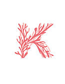 Letter K pink colored seaweeds underwater ocean plant sea coral elements flat vector illustration on white background