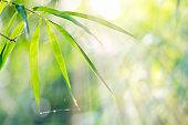Bamboo Leaf.