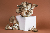 oyster mushrooms on a foam cube on a beautiful brown background