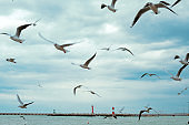 lot of gulls on the background of cloudy sky and the lighthouse