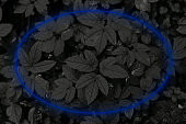 neon frame on a background of black leaves