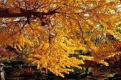 Autumn Leaf Color of Hibiya Park in Tokyo