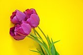Tulips flowers. Floral greeting card. three purple tulips on a bright yellow background.spring flowers. floral background.International Women's Day, Mother's Day