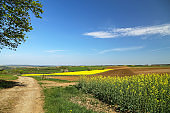 Spring landscape. Cultivated colorful raps field in Germany