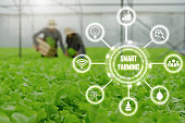 couple farmer harvesting fresh green oak lettuce salad, organic hydroponic vegetable in greenhouse garden nursery farm with visual icon, digital technology agriculture and smart farming concept