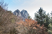 Bukhansan Mountain national park with rocks, snow, and dead trees in the spring in Seoul of South Korea.