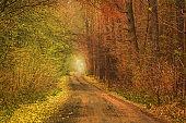 Beautiful autumn  romantic tree tunnel. Natural tree tunnel in Ukraine.
