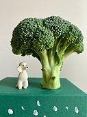 Miniature Poodle under a Broccoli Tree