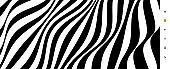 Black and white design. Pattern with optical illusion. Abstract striped background. Vector illustration.