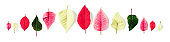 Poinsettia christmas flower petals and leaves creative banner